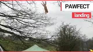 Video Shows Cat Falling From Tree On To Makeshift Trampoline