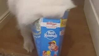 Dog Helps Himself To Snack And Gets Stuck In Box