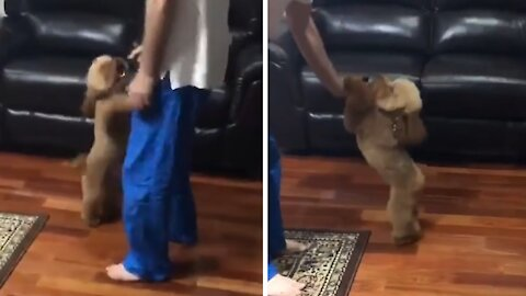 Doggy gets super excited to see owner on video call