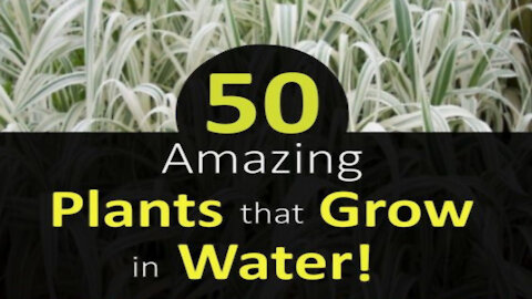50 Plants That Grow In Water