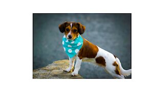 |Dog stock footage. This footage will steal your heart!! Cute collection|