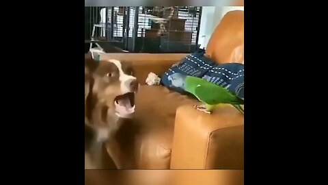 Dog and parrot battle