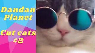 Dandan Planet - cute cats for you #2