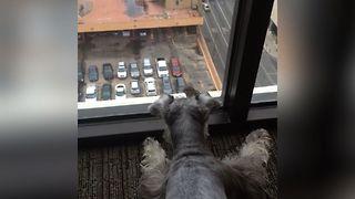 Dog Plays With Bird