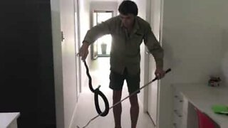 Slu slange funnet bak et kjøleskap