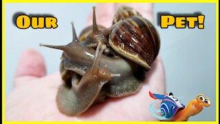 Our Pet Snails!