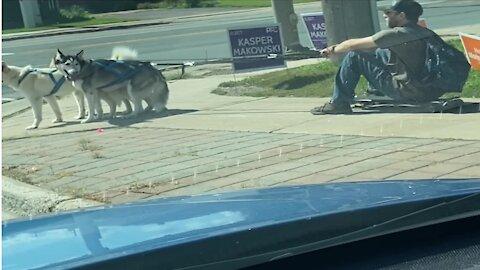 Skateboarder turns trio of huskies into summertime dog sled