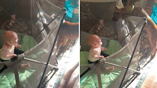 Playful pup is the best at making baby girl laugh