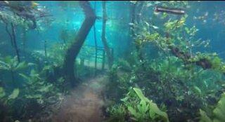 Raro fenomeno crea sentieri sommersi in Brasile