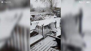 Un chien découvre la neige pour sa plus grande joie !