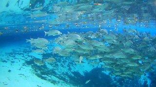 Amazing Snorkeling Video