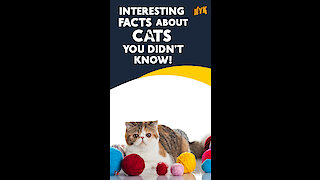 Interesting Facts about Cats you didn't know