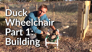 Building a Duck Wheelchair - Part 1: Building