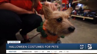 Tips to get your pet a Halloween costume