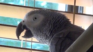 Hungry parrot and his owner are looking forward to eating