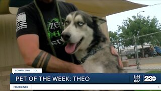 Pet of the week: Theo