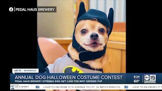 BULLetin Board: Halloween dog costume contest