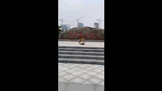 Funny videos dog