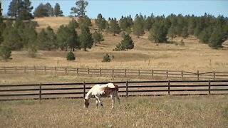 Equine therapy program organizers wonder why transportation issues were not flagged earlier