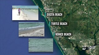 Sarasota County says red tide present on all its beaches