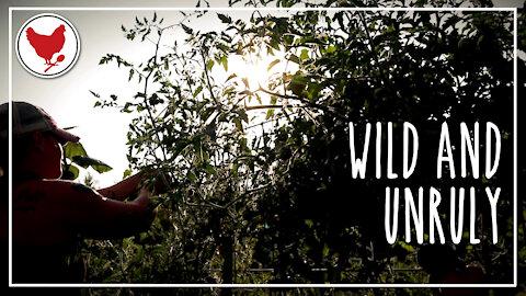 Wild & Unruly | A Good Life Farm