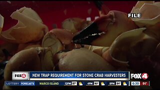 New recreational regulation for stone crab traps this season