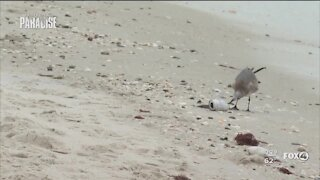 Fort Myers Beach leaders fighting for clean water