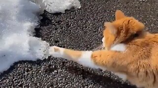 Cat sees snow first time in his life