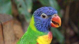 Cute Pets & Animals & Birds Compilation
