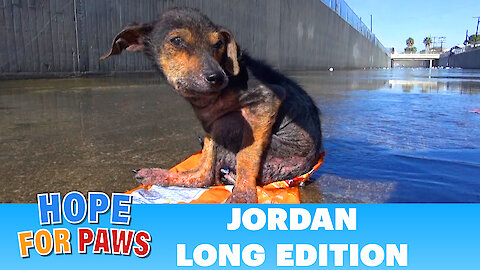 Abused dog found refuge on a bag on chips in the L.A river.
