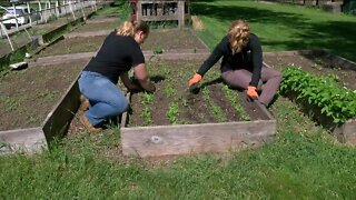 UW-Milwaukee garden helps feed students
