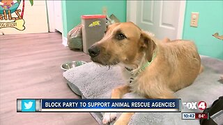 Cape Coral businesses band together to help shelter animals
