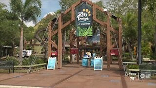 ZooTampa incentivizes COVID-19 vaccine for staff