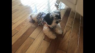 Cutest puppy makes a big mess