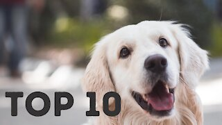 Top 10 Most Popular Dog Breeds In The World 2021