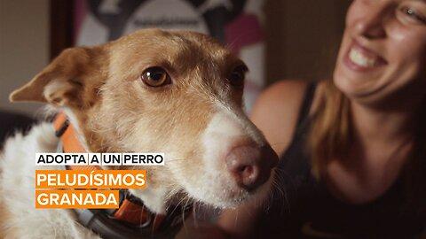 Adopta a un perro: Peludísimos de Granada