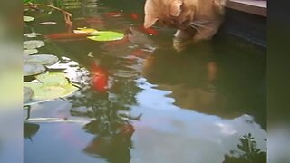 Kitty Gets Curious About Fish