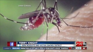 New more aggressive breed of mosquito bites Kern County