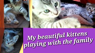 My beautiful kittens playing with the family