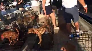 52 dogs from the Bahamas arrive on yacht in West Palm Beach