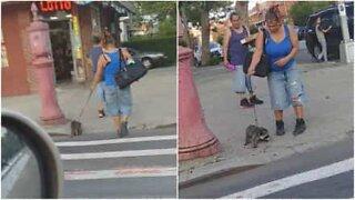 Woman is filmed walking a raccoon in NYC