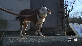 Dog shot, injured in KCK