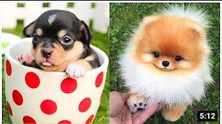 Super Cute Puppies!! Super Huggggss!!