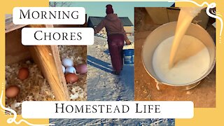 Real Homestead Morning Chores   Milking cow   Winter