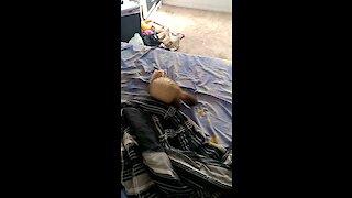 Jumpy ferret