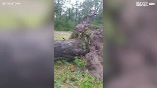 Hurricane Laura nearly kills dogs