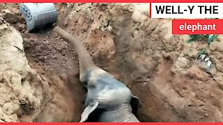 Baby elephant rescued after falling down a well