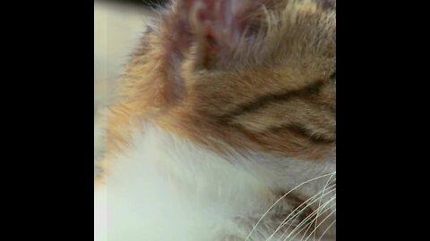 Tu inestabilidad puede estar afectando a tu gato   Sabías que...