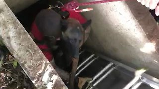 Hot dog! Firefighters and desperate owner bravely rescue trapped dog from underground bunker
