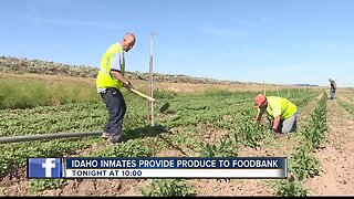 TEASE 2 : Prison program provides produce to Idaho Foodbank